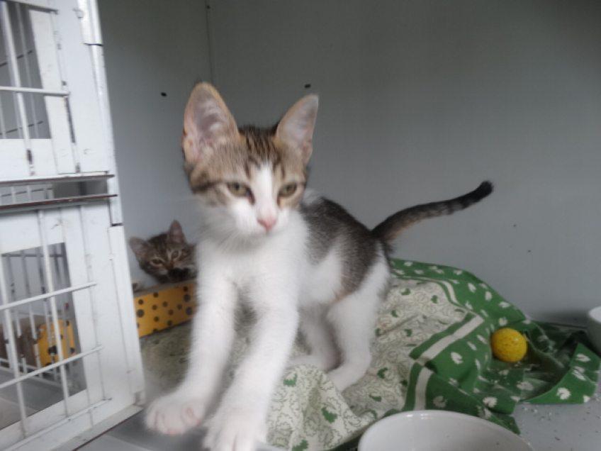 Tiere-im-Monat-Juli-%3A-Neue-Katzen-im-Tierheim-K%C3%BCrten