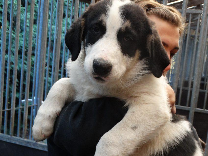 Drei neue Junghunde im Tierheim Kürten